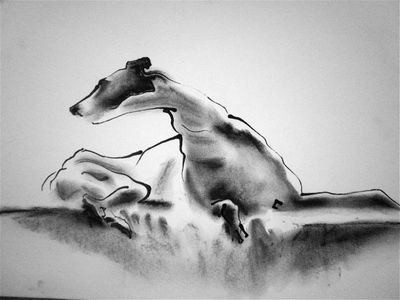 Ink on Paper - Sighthound - Tony by Diana Shepherd
